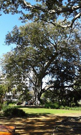 Claremont, Sudáfrica: Lovely tree