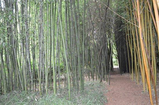 Le Buisson-de-Cadouin, Франция: Jardin de Planbuisson au Buisson de Cadouin