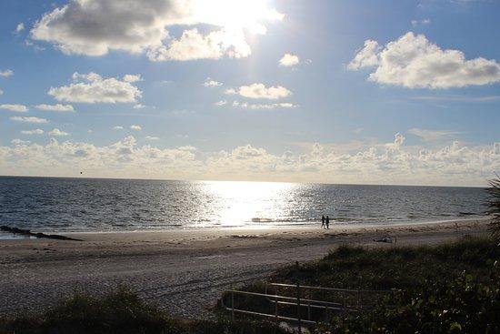 The Beachflower Photo