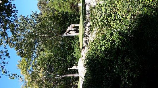 Asheboro, Carolina do Norte: 20161006_110858_large.jpg
