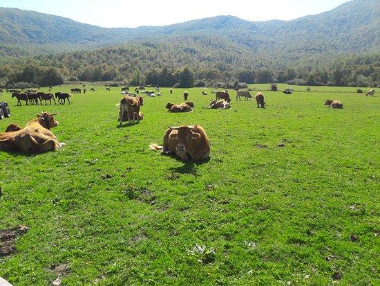Ranch Brionna: paesaggio