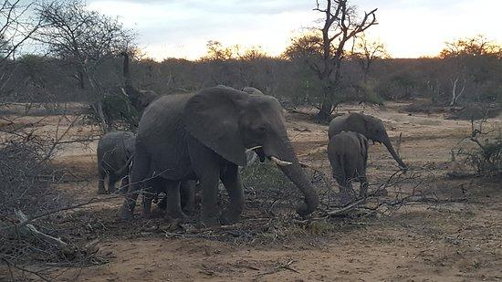 Kambaku Safari Lodge: 20161004_175530_large.jpg