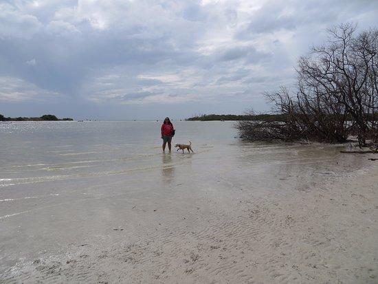 The Bonita dog beach was great fun.