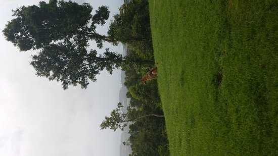 El Hotelito at the Rainforest Experience Farm: 20160929_062805_large.jpg