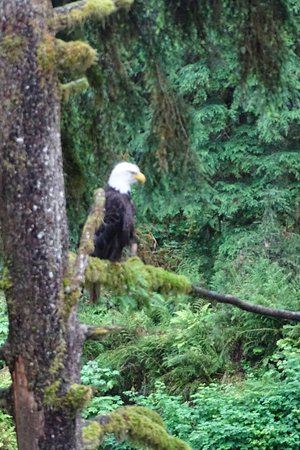 Wrangell, AK: An eagle perched just off the observation deck for 45 minutes.
