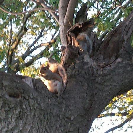 Battery Park: 16-09-26-08-20-17-024_deco_large.jpg