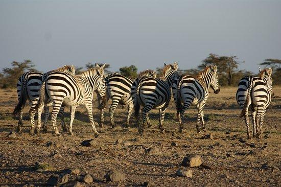 Porini Rhino Camp: Ol Pejeta Conservancy