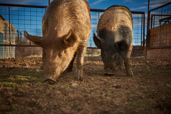 Lafayette, CO: Luvin Arms Animal Sanctuary- Happy Residents