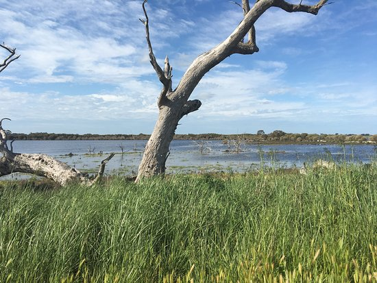 Grassflat Swamp Flora and Fauna Reserve