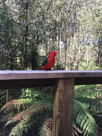 Narbethong, Australia: photo2.jpg