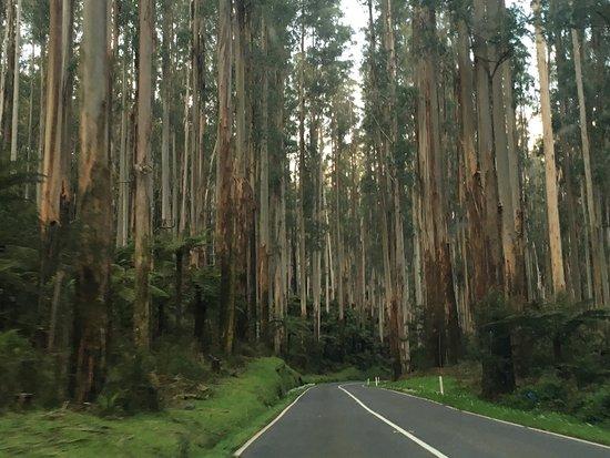 Narbethong, Australia: photo3.jpg