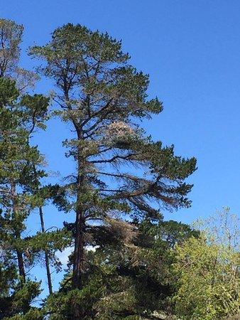 Albany, Australien: The Osprey Nest