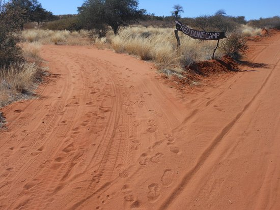 Gochas, Namibia: the way forks to the Dune, from here you need a 4x4