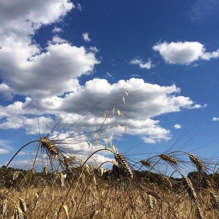 Villa Acquaviva: il nostro grano