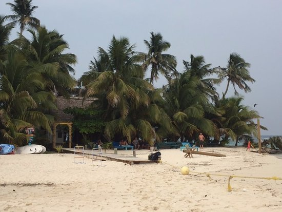 Placencia, Belize: Beach w/the bar & tables in the palm trees. Snorkeling equipment, beach chairs, good music.