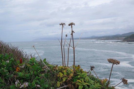 Depoe Bay, OR: Coastal views