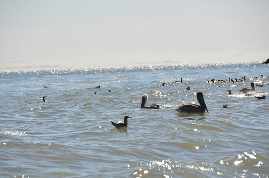 Seaweed Express: Pelicans and all sorts of other birds...
