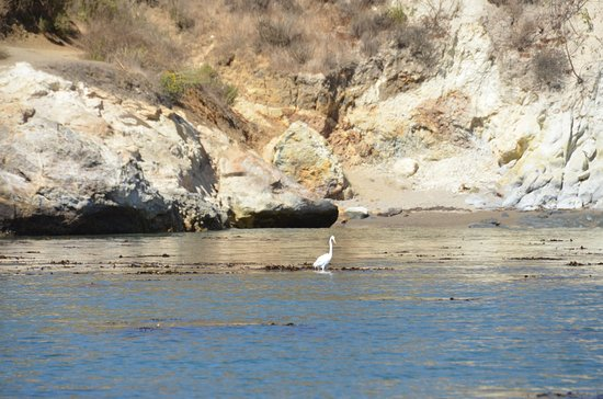 Seaweed Express: Heron in one of the many beautiful coves you visit