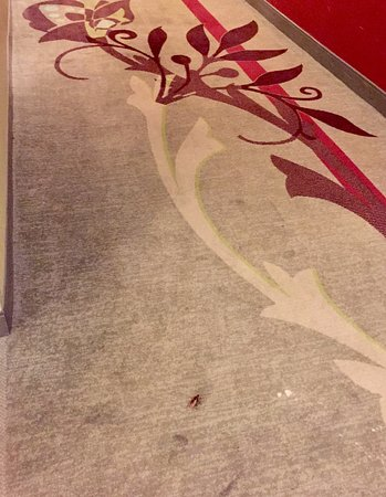 Doubletree by Hilton Chicago Magnificent Mile: roach waiting for an elevator