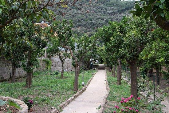 Villa Flavia: giardino