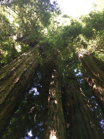 Orick, CA: Look up