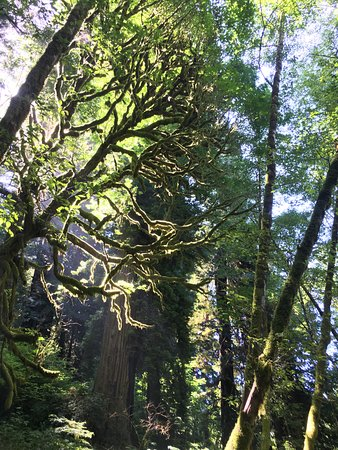 Orick, CA: Artistic trees
