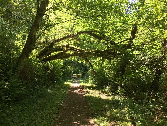 Orick, CA: gentle forest path