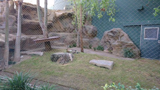 20161008 164509 Picture Of Siegfried Roy 39 S Secret Garden And Dolphin Habitat Las