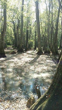 Natchez Trace Multi-Use Trail: Cypress Swamp