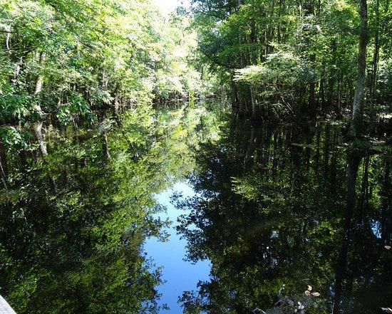 Harleyville, SC: Swamp