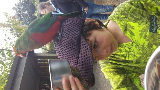 Kerikeri, Nueva Zelanda: Great fun for kids and adults