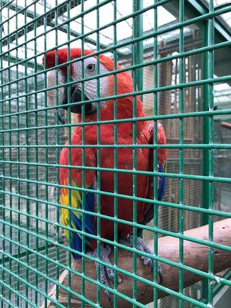 Toni's Zoo: photo5.jpg