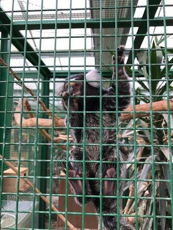 Toni's Zoo: photo6.jpg