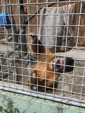 Toni's Zoo: photo8.jpg