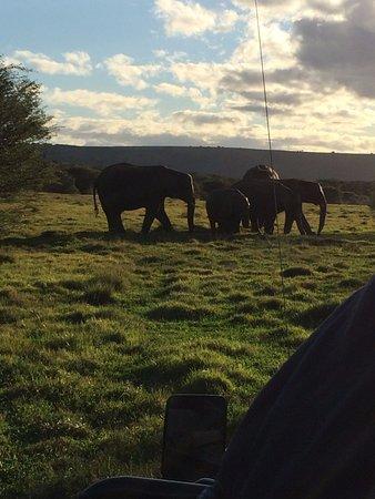 HillsNek Safaris, Amakhala Game Reserve Photo