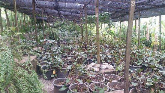 Kwali, ไนจีเรีย: plants 2