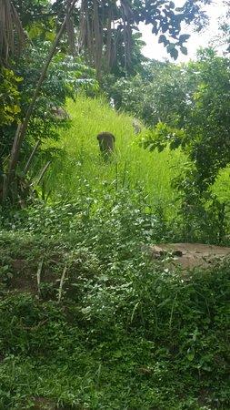 Kwali, ไนจีเรีย: monkey 2