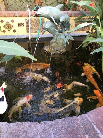 The Avalon Hotel: The koi pond.