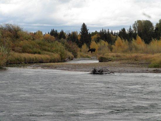 Solitude Float Trips: Moose