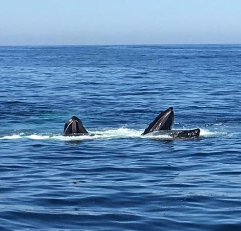 Cape Ann Whale Watch: Amazing sight