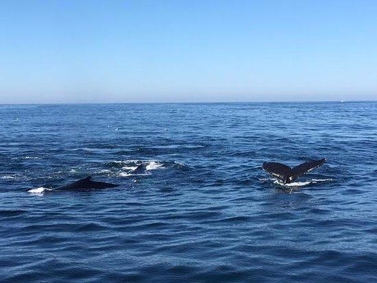 Cape Ann Whale Watch: Great trip