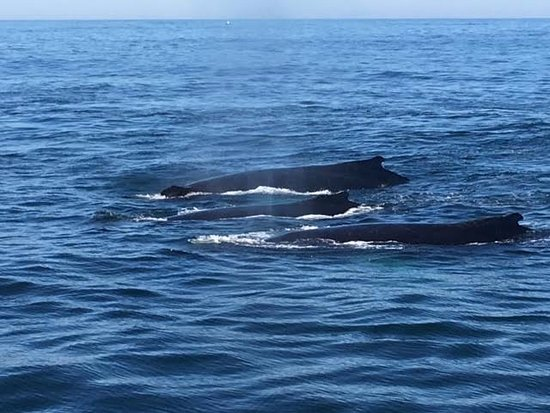 Cape Ann Whale Watch: Great day!