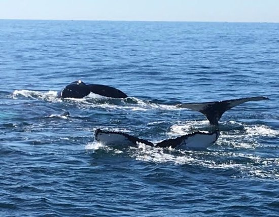 Cape Ann Whale Watch: Great day with my teenage daughters