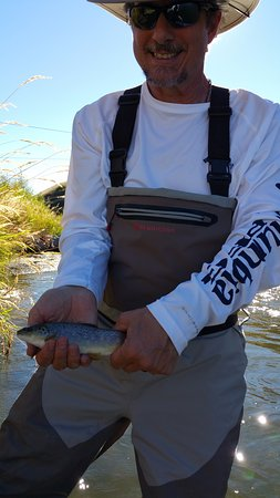 Utah Pro Fly Fishing Tours : Brown trout in the Weber river.