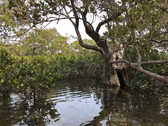 Huskisson, ออสเตรเลีย: photo2.jpg