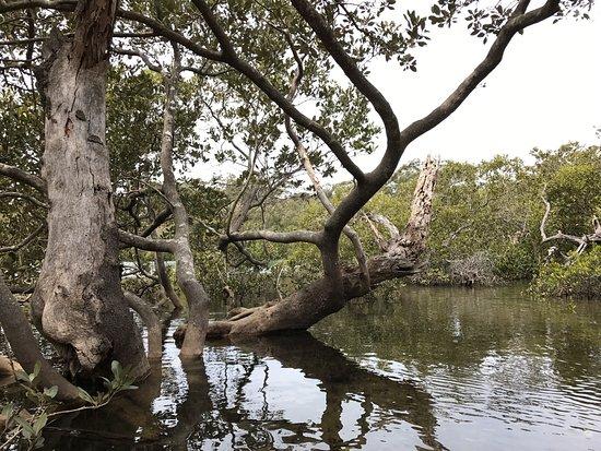 Huskisson, ออสเตรเลีย: photo5.jpg