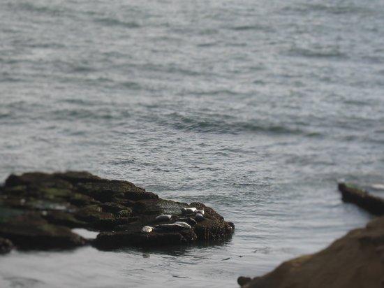 Inn at Arch Rock: Seals on rocks taken from Room 7