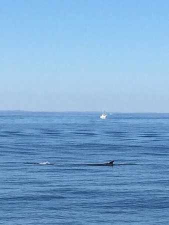 Odyssey Whale Watching: photo1.jpg