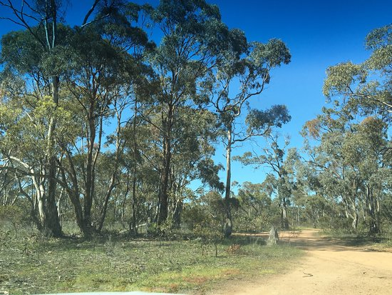Deep Lead Flora & Fauna Reserve