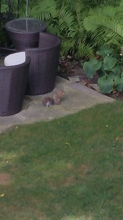 Les Diplomates B&B: Lot's of squirls in the garden